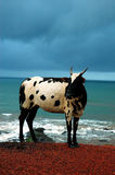 The cow. Stock Photography