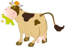 Cow. With flower in the mouth Stock Photo