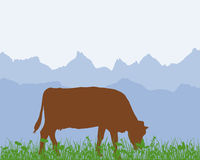 Cow in the alpine meadow Royalty Free Stock Photography