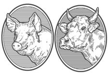 Cow And Pig Head. Hand Drawn Sketch In A Graphic Style. Vintage Vector Engraving Royalty Free Stock Photography