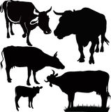 Cow animals. Calf isolated agriculture stock illustration