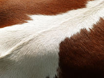 Cow background, (2), detail. Brown and white Royalty Free Stock Photos