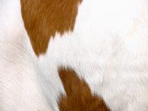 Cow background (7) Stock Photos