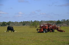 Cow and Baler in field Stock Photo