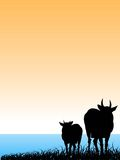 Cow on bank. Cow standing on bank of river on gradient background Stock Photo