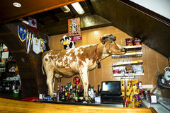 Cow in a bar at Camara de Lobos is a fishing village near the city of Funchal and has some of the highest cliffs in the world. The location of the modern town is stock photography