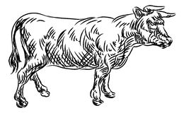 Cow Beef Food Grunge Style Hand Drawn Icon Stock Image