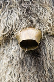 Cow bell and sheep's wool Stock Photos