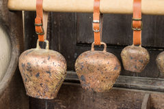 Cow bells for entire bovines family Stock Images
