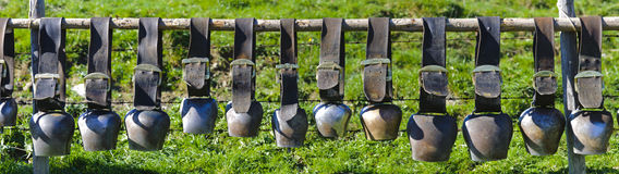 Cow bells in line Royalty Free Stock Photo