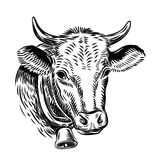 Cow black head Royalty Free Stock Image