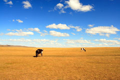The cow In the blue sky Stock Photography