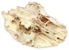 Cow bone Stock Images