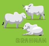 Cow Brahman Cartoon Vector Illustration Stock Photo