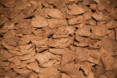Cow and buffalo  dry dung cake Stock Photography