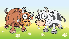 Cow and Bull. On summer meadow - vector will be additional Stock Photography