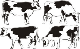 Cow and bull Stock Photos
