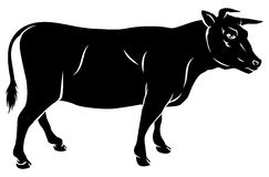 Cow or bull beef illustration Royalty Free Stock Photos
