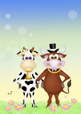 Cow and bull in love Royalty Free Stock Photos