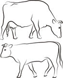 Cow and bull - outlines Royalty Free Stock Photo