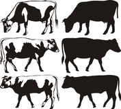 Cow and bull - silhouettes Royalty Free Stock Photo