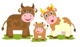 Cow, bull and small calf. On white background Stock Photo