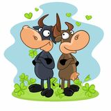 Cow and bull Royalty Free Stock Images