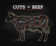 Cow butcher cut beef chalkboard scheme. Cow meat steak diagram. Cow butcher cut beef chalkboard scheme for restaurant menu poster, vector illustration Royalty Free Stock Photo