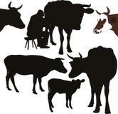 Cow a calf animals Royalty Free Stock Photo