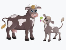 Cow and calf. Cow annd calf the cow looks at the baby, the calf brings the clover flower Royalty Free Stock Photo