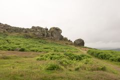 Cow and Calf Ilkley Royalty Free Stock Photography