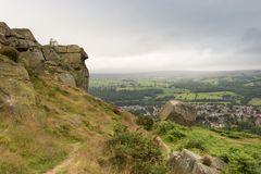 Cow and Calf Ilkley Royalty Free Stock Images