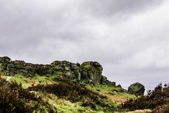 Cow and Calf Ilkley stock photo