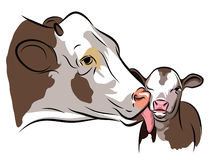 Cow and a Calf. On white Royalty Free Stock Photos