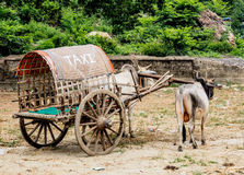 Cow carriage at Mingun, Mandalay, Myanmar Stock Images