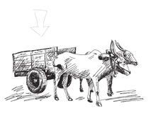 Cow carries a cart. Hand drawn stock illustration