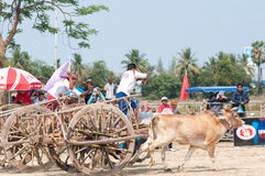 Cow cart racing festival in Thailand Royalty Free Stock Images