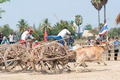 Cow cart racing festival in Thailand Stock Photos