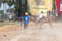 Cow cart racing festival in Thailand Royalty Free Stock Photo