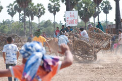 Cow cart racing festival in Thailand Stock Images