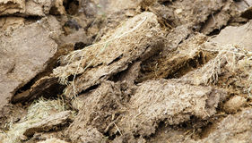 Cow cattle manure texture background Stock Photos