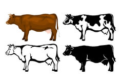 Cow Cattle side view set Stock Photos