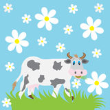 Cow and chamomile Stock Photo