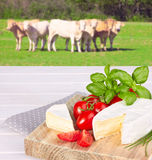 Cow cheese, cherry tomato, and basil Stock Images