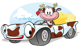 Cow with cheese go by car Stock Images