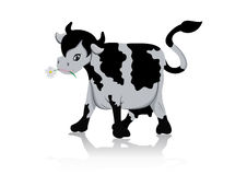 Cow chewing flower Stock Photos
