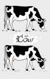 Cow. Cow eating grass. Cow isolated, set of elements vector illustration