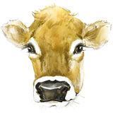 Cow. Cow watercolor illustration. Milking Cow Breed. Royalty Free Stock Image