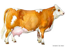 Cow. Cow watercolor illustration. Milking Cow Breed. Simmental Cow Breed Stock Photo