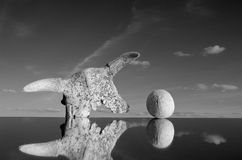 Cow cranium and stone concept on mirror. Black and white picture stock photos